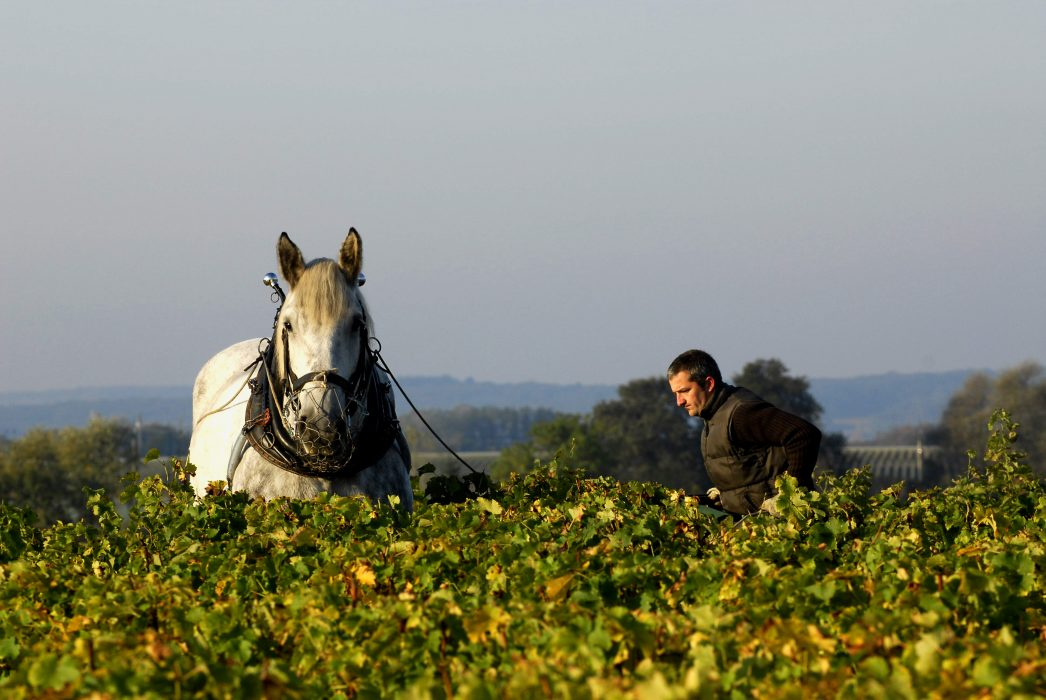 vins biologiques et naturels pour mariage pays de la Loire